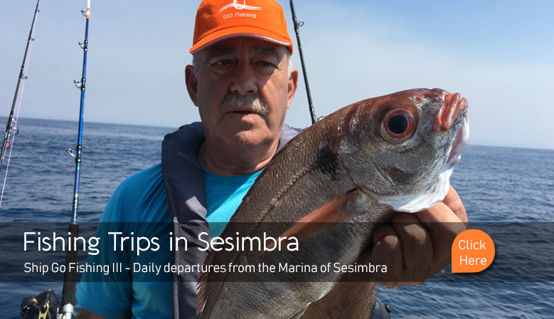 Fishing trips in Sesimbra